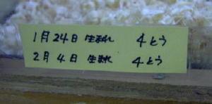 20050211saitama-01