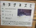 20070211saitama011