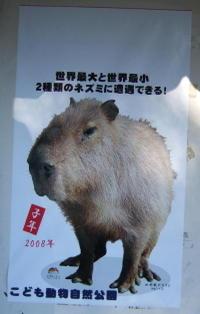 20080103saitama009