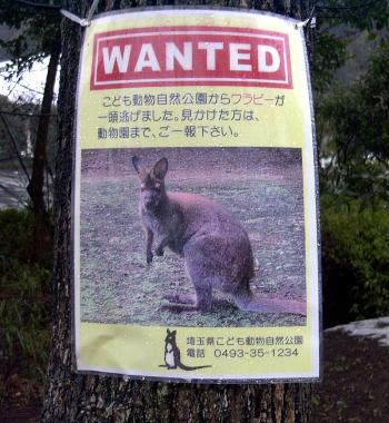 saitama_wanted