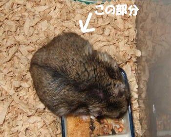 tasuke044