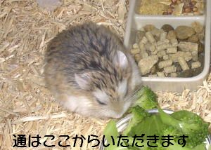 jirokiti004.jpg