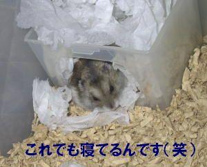 tasuke004.jpg