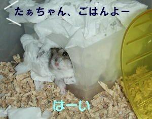 tasuke005.jpg