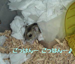 tasuke006.jpg