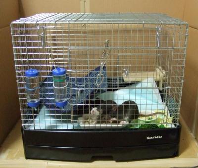 Rat3_002