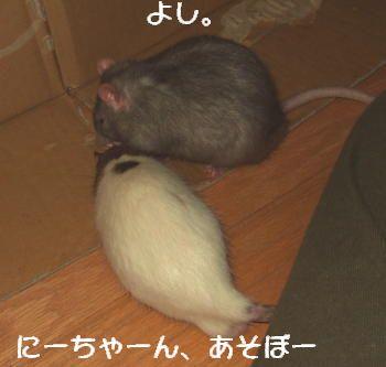 Fujiran008