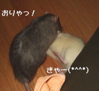 Fujiran009